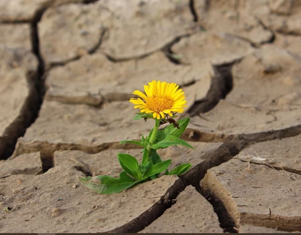 flower growing from cracks in ground